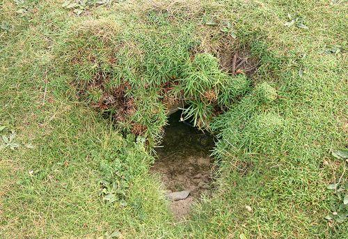 Bigstock_Rabbit_Hole_Cornwall_Uk_1071520