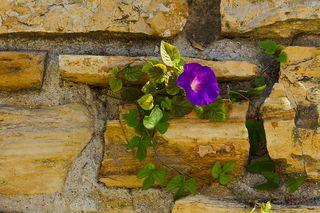 Bigstock-Old-Flagstone-Garden-Wall-7520171
