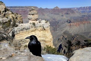 Bigstock-Grand-Canyon-14288147