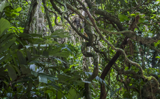 Bigstock-Tangle-Of-Green-Jungle-Foliage-250286386